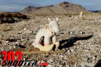 Beautiful Desert Turned Shooting Dump